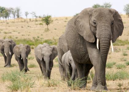 Safari i Tarangire National Park