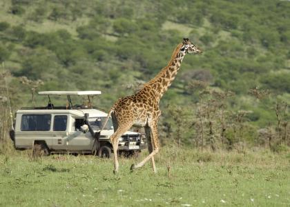 Privat safari i Tanzania med egen guide og egen safari-bil