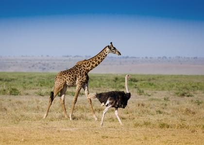 Safari i Serengeti