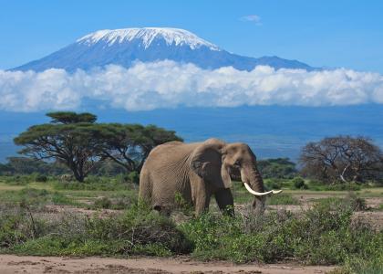 Afrikas højeste bjerg, med sne på toppen!