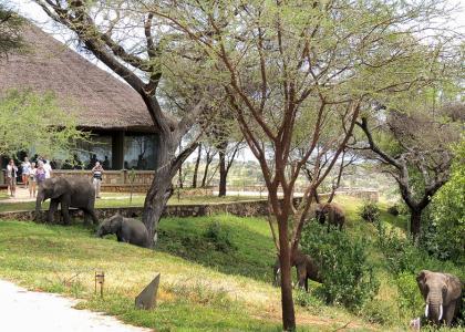 Elefanter besøger lodgen i Tarangire